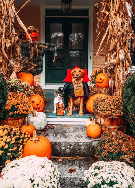 Halloween Decor with Corn Stalks