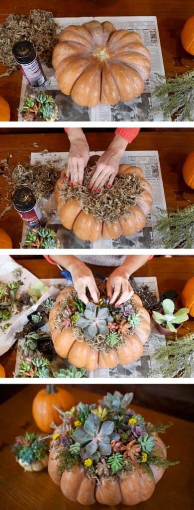 Succulent Pumpkin Fall Thanksgiving Centerpiece Craft