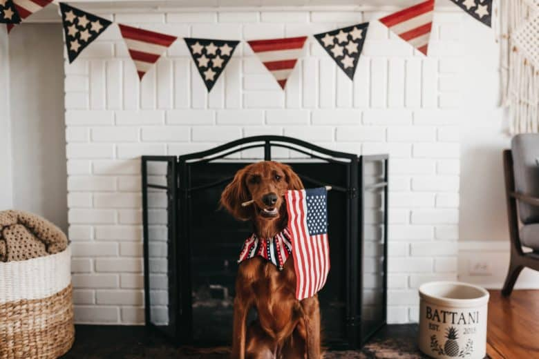 Easy DIY 4th of July party ideas and decoration tip using pets.